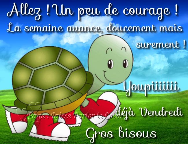 Bon Vendredi Vendredi-tortue